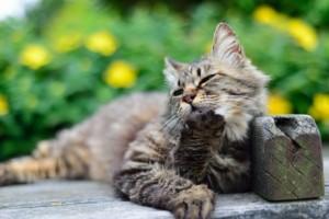 think_cat